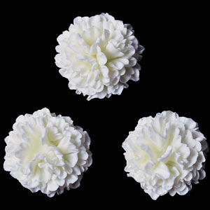 Carnation Flowers - White