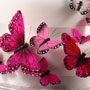 Butterfly Cake Deco Set-Blushing Pink